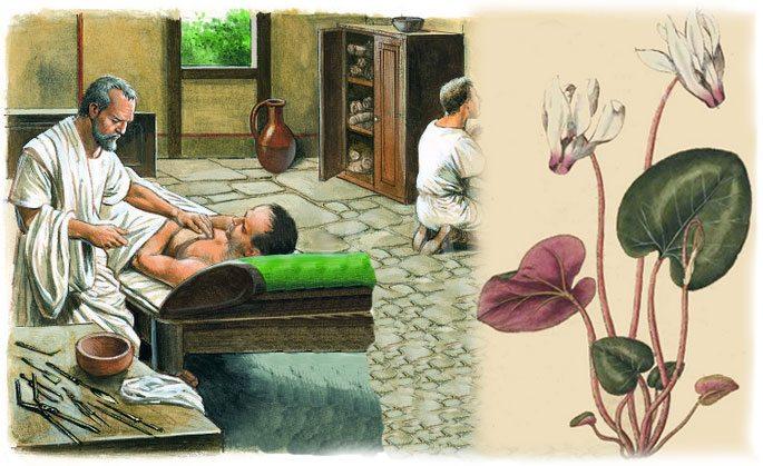 Цикламен использовали в древней медицине